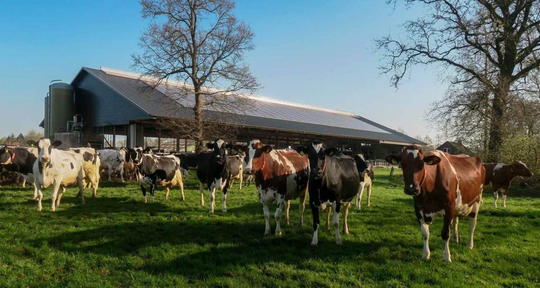 Vlees verkopen, wel of niet ethisch verantwoord?